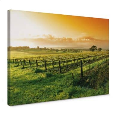 Leinwandbild Wein im Sonnenuntergang