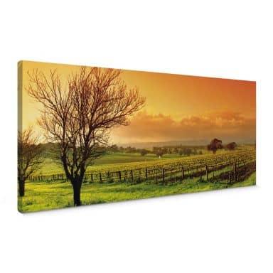 Vineyard Panorama Canvas print