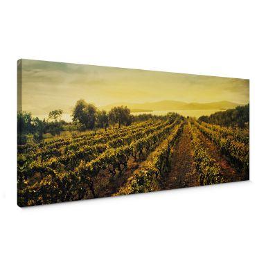 Leinwandbild Weinreben im Sonnenuntergang - Panorama