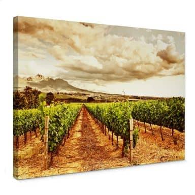 Leinwandbild Weinreben in den Bergen