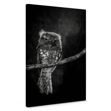 Leinwandbild Wilianto - Staring Owl