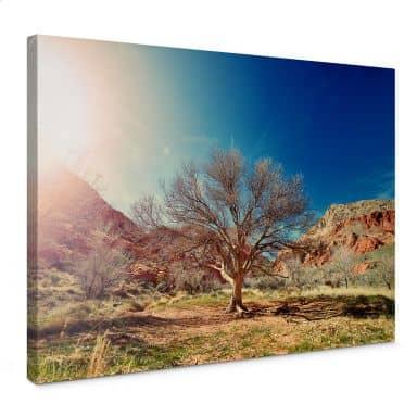 Leinwandbild Wüstenbaum