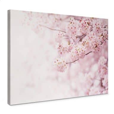 Leinwandbild Zarte Kirschblüten
