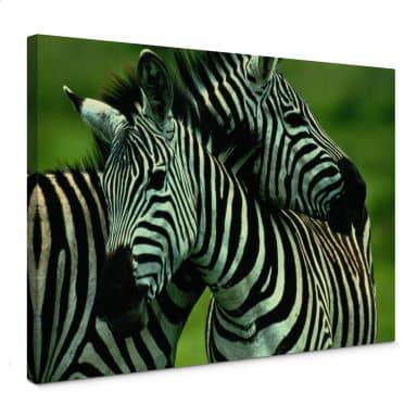 Leinwandbild NG Zebra Paar