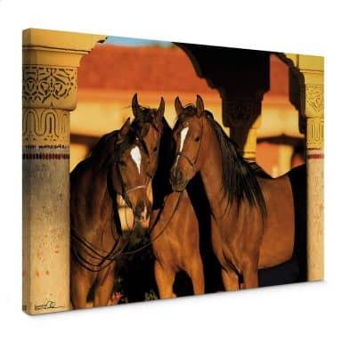 Canvas Arabisch Volbloed
