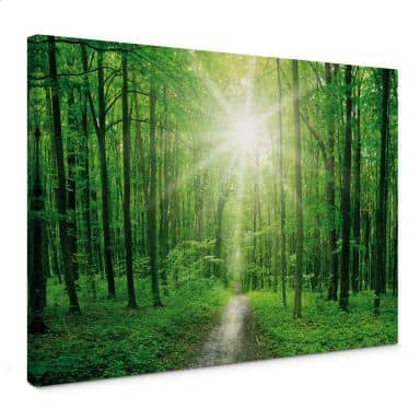 Canvas Print Sunny Forest 01