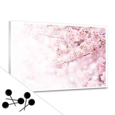 Opslagstavle - Kirsebærblomster inkl. 5 nåle