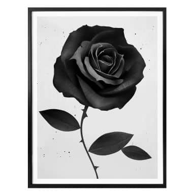 Poster Ireland - Fabric Rose - Stoffrose