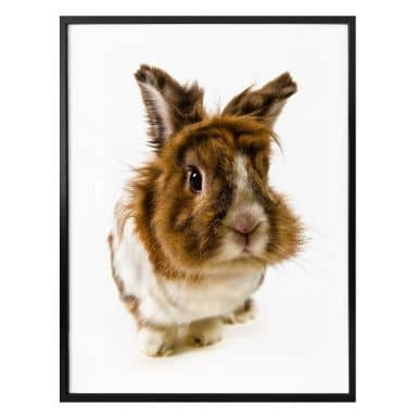 Poster Rabbit