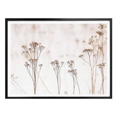 Poster High Grass
