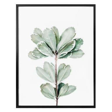 Poster Sisi & Seb - Botanik