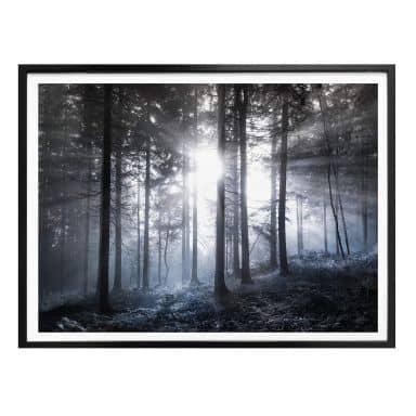 Poster Sonnenstrahlen im Wald Blau