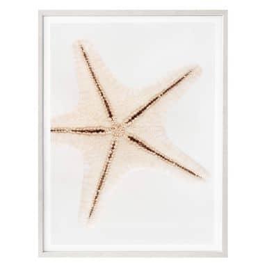 Poster Hugonnard - Weißer Seestern