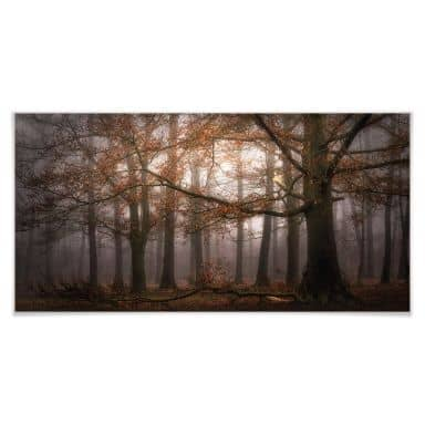 Poster Dingemans - Nebel im Herbstwald - Panorama