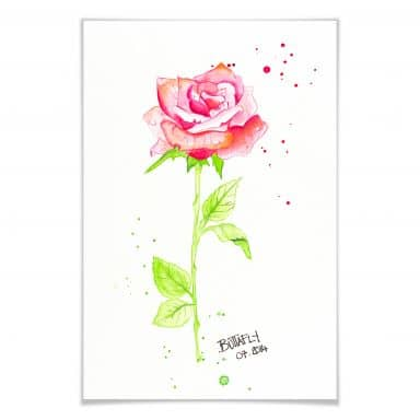 Poster Buttafly - Rose