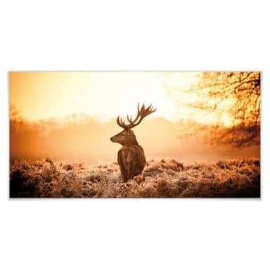 Poster Majestic stag - Panoramic