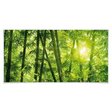 Poster of sunshine in the bamboo forest - panoramic