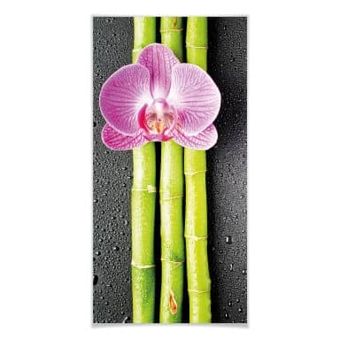 Poster Orchid and Bamboo - Panorama 01