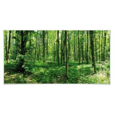 Poster - Forêt en panorama 01