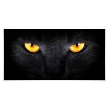 Poster cat\'s eyes