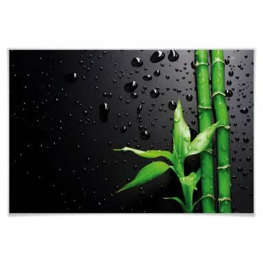 Poster Bamboo over Black