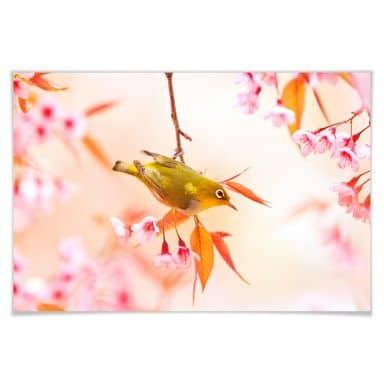 Poster Vogelgezwitscher in der Kirschblüte