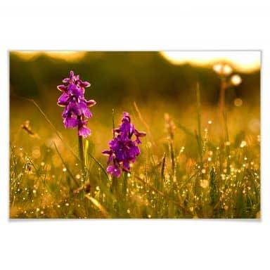 Poster Blumen im Morgentau