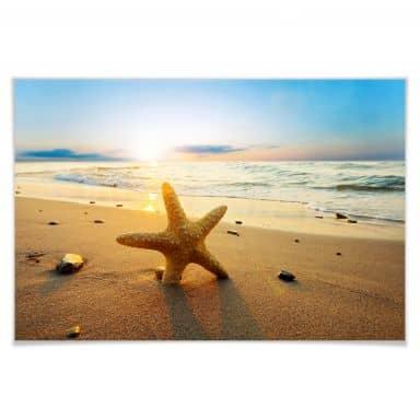 Poster Seestern im Sand