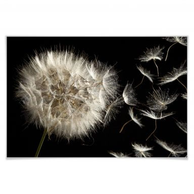 acrylglasbild pusteblume blumige frische f r die wand wall. Black Bedroom Furniture Sets. Home Design Ideas