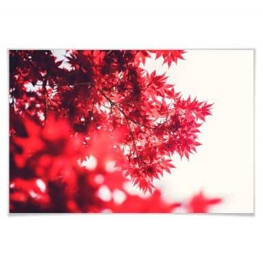 Poster Ahornbaum im Herbst