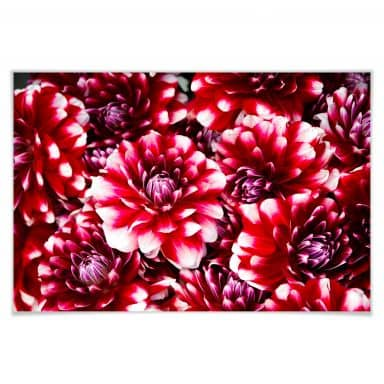 Poster red flowers