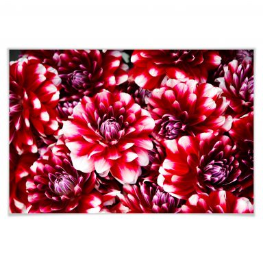 Poster Rote Blütenpracht