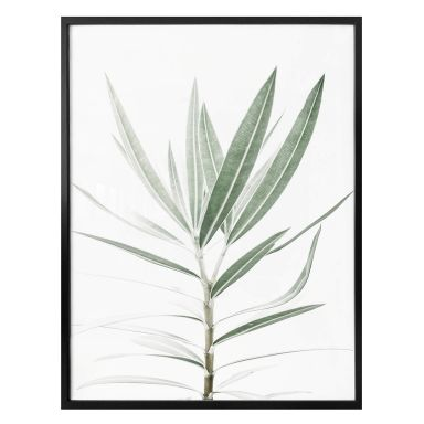 Poster Sisi & Seb - Oleander