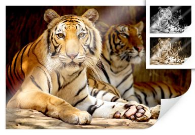 Poster two Bengal tigers