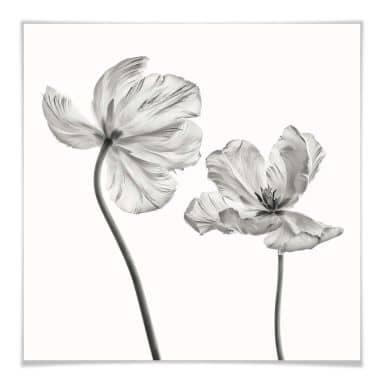 Poster Grønkjær - Tulpenblüte