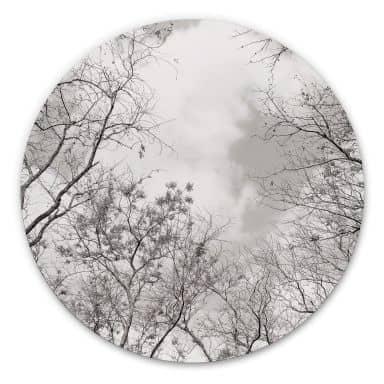 Alu-Dibond Baumkronen im Himmel - Rund