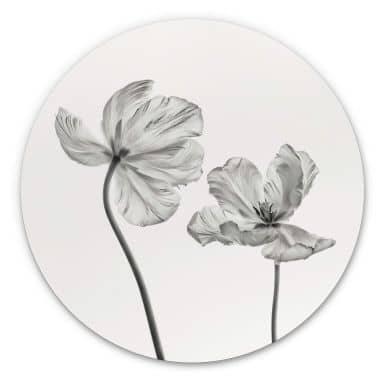 Alu-Dibond Grønkjær - Tulpenblüte - Rund