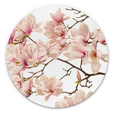 Alu-Dibond Kadam - Flora Magnolia im Frühling - Rund