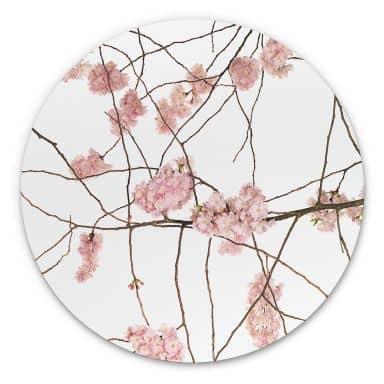Wandcirkel Kadam - Cherry Blossoms