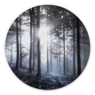 Alu-Dibond Sonnenstrahlen im Wald Blau - Rund