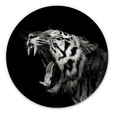 Alu-Dibond Meermann - Der Tiger - Rund