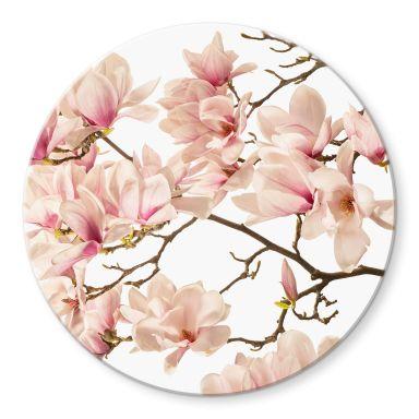 Glasbild Kadam - Flora Magnolia im Frühling - Rund