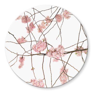 Glasschilderij Rond Kadam - Cherry Blossoms