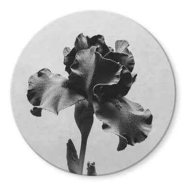 Glasbild Kadam - Schwertlilie - Rund
