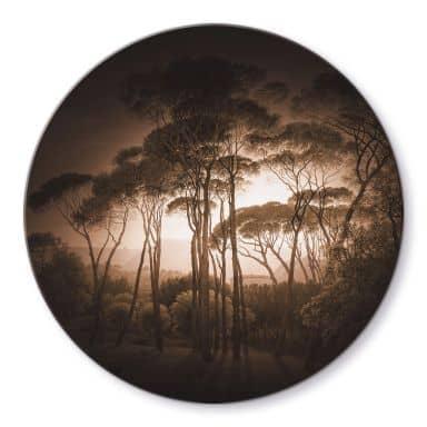 Glasbild Schirmkiefern mit Vignettierung Sepia - Rund