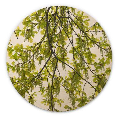 Tableau sur bois Kadam - Chêne - Rond