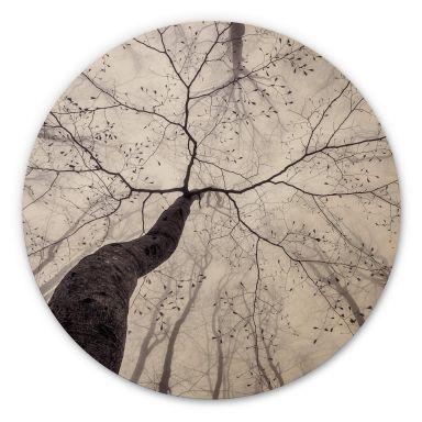 Holzbild Pavlasek - Ein Blick in die Baumkronen - Rund