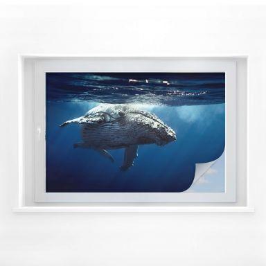 Film occultant - Baleine à bosse dans les profondeurs