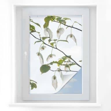 Window Foil Tan Kadam - Dove Tree