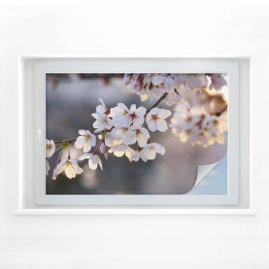Window foil Cherry Blossom